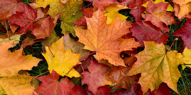 Remèdes Naturels d'Octobre  – Tuto envideo